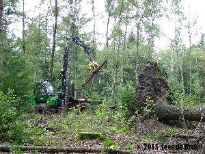 Bosbouw.jpg