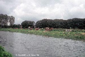 De Raam Mill 1985.jpg