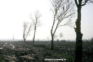 Natuuronderhoud bomensnoei roofbouw 1984.jpg