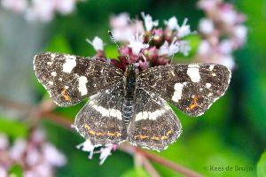 vlinder1.jpg