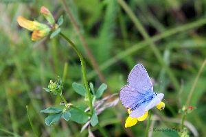 vlinder12.jpg