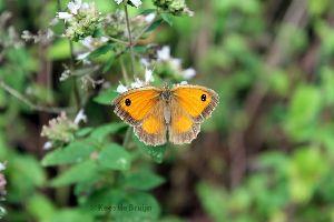 vlinder13.jpg