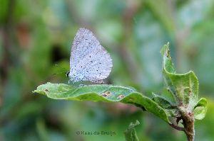 vlinder14.jpg