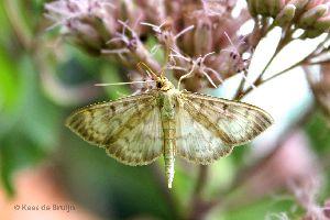 vlinder15.jpg