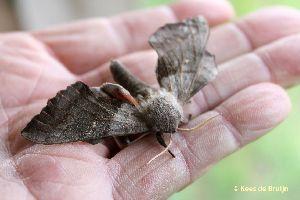 vlinder17.jpg
