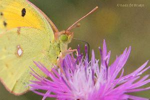 vlinder18.jpg