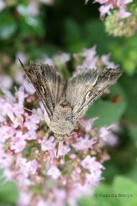 vlinder6.jpg