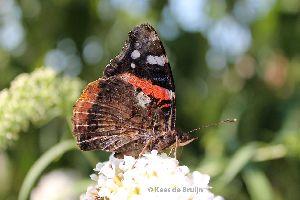 vlinder7.jpg