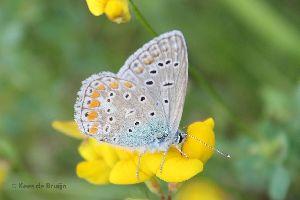 vlinder9.jpg
