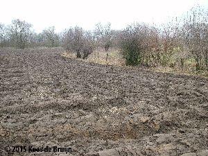 bodem : landbouwgrond.jpg